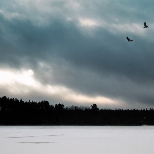 Crows flying over a frozen lake