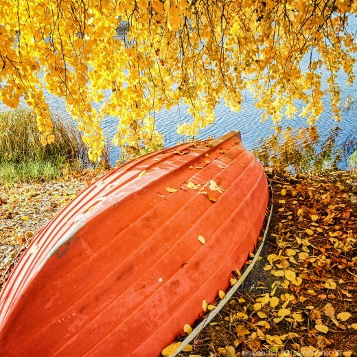 A boat covered with autumn leaves