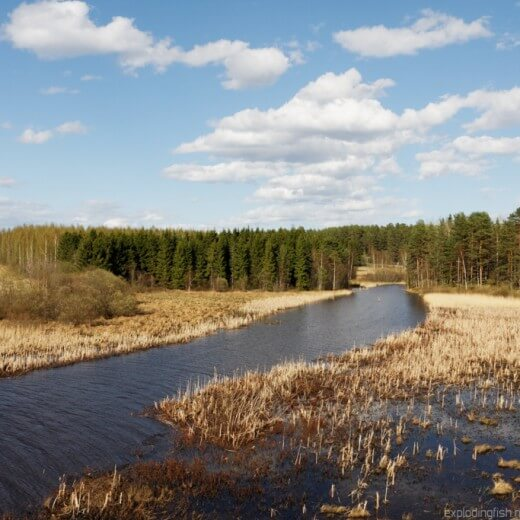 Spring day at Pappilanjoki River